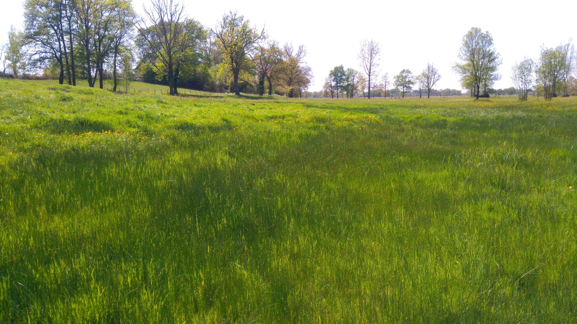 Prairie humide à joncs